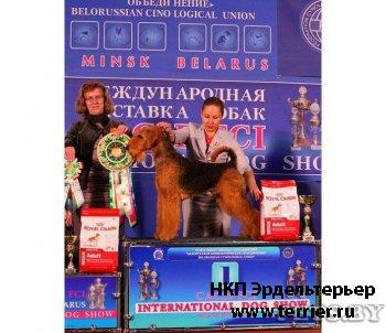 Щенки эрдельтерьера от Чемпиона Европы и Вице-Чемпионки Мира.